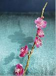 Photo Branche de cerisier 2