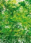 Photo murale de branches d'arbres (4 panneaux à coller)