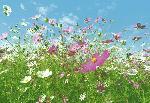 Photo murale d'un champ de fleurs (8 panneaux à coller)