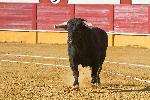 Affiche taureau dans la corrida 2