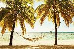 Affiche d'une plage avec hammac