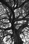 Photo noir et blanc arbre