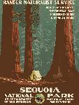 Affiche ancienne Sequoia National Park