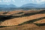 Photo paysage montagne en fond en Afrique du Sud