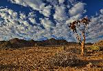 Photo paysage sud africain arbre