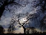 Photo d'arbre aux coucher du soleil