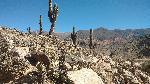 Photo cactus prêt de Salta en Argentine