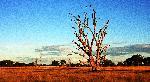 Photo arbre dans le désert Australien