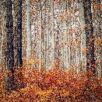 Photo arbre foret autrichienne à l'automne