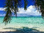 Photo palmier sur plage Bahamas