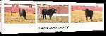 Toiles imprimées Affiche taureaumachie