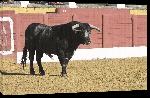 Toiles imprimées Affiche taureau dans la corrida 3