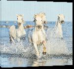 Toiles imprimées Poster chevaux of Camargue
