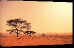 Toiles imprimées Poster de l'Afrique