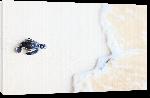 Toiles imprimées Poster bebe tortue black & white