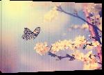 Toiles imprimées Poster papillon