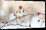 Toiles imprimées Poster oiseau sous la neige