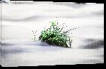 Toiles imprimées Photo macro plante