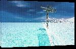Toiles imprimées Photo d'un hamac sur la plage