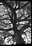 Toiles imprimées Photo noir et blanc arbre