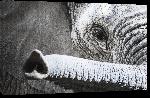 Toiles imprimées Elephant