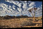 Toiles imprimées Photo paysage sud africain arbre