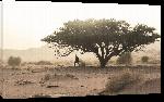 Toiles imprimées Photo arbre dans le désert du Sahara en algérie