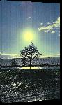 Toiles imprimées Photo crépuscule sur arbre en Autriche