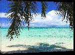 Toiles imprimées Photo palmier sur plage Bahamas