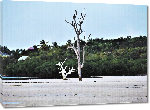 Toiles imprimées Photo arbre mort plage Bahamas