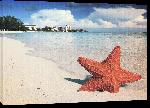 Toiles imprimées Photo étoile de mer plage Bahamas
