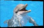 Toiles imprimées Poster photo d'un dauphin