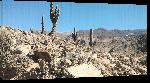 Toiles imprimées Photo cactus prêt de Salta en Argentine