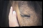 Toiles imprimées Photo détail cheval