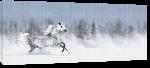 Toiles imprimées Photo d'un cheval dans la neige