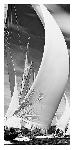 Poster photo Les Voiles de Saint-Tropez