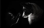 Impression sur aluminium Photo portrait chien Border Collie et un chat
