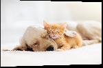 Impression sur aluminium Photo de chien et chat ensemble