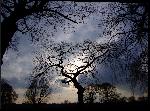 Impression sur aluminium Photo d'arbre aux coucher du soleil