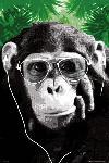 Affiche d'un singe