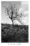 Photo Noir et blanc arbre en Cerdagne