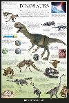 Poster éducatif en anglais sur les dinosaures