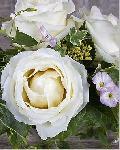Poster de Catherine BEYLER Roses