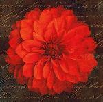Affiche d'art de Studio Voltaire Scripted dahlia