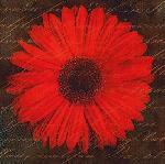 Affiche d'art de Studio Voltaire Scripted daisy