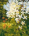 Affiche d'art de J.CHARLES Summer clematis