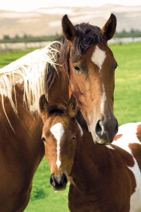image cheval avec son poulain