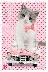Poster d'un chaton Studio Pets