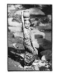 Photo noir et blanc de Kim Anderson World of Kim Anderson VII