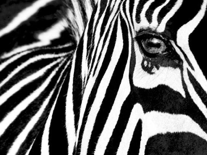 poster noir et blanc de rocco sette black white ii zebra acheter poster noir et blanc de. Black Bedroom Furniture Sets. Home Design Ideas